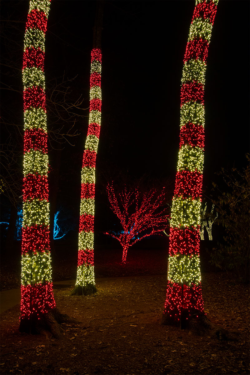 nashville-tn-tree-wrap-lighting-in-candy-can-colors