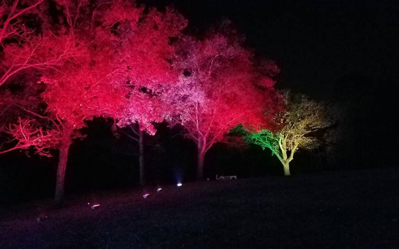 nashville-holiday-lighting-at-cheekwood