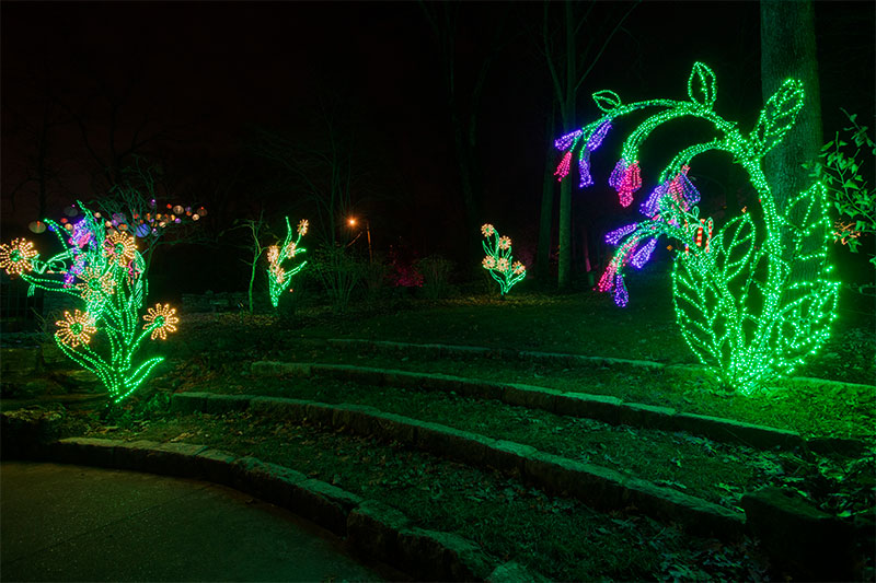 botanical-inspired-commercial-holiday-lighting-at-cheekwood