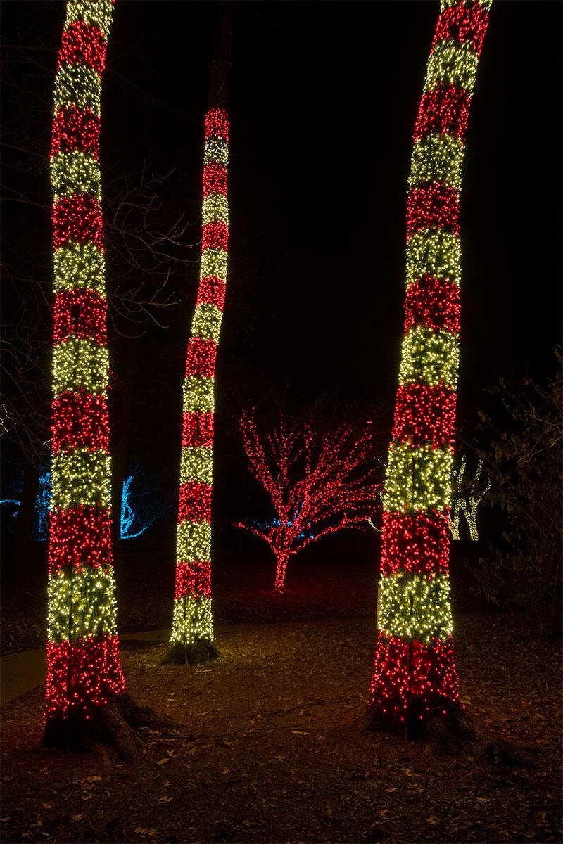Gallery Tree Wrap Amp Focal Tree Lighting Nashville