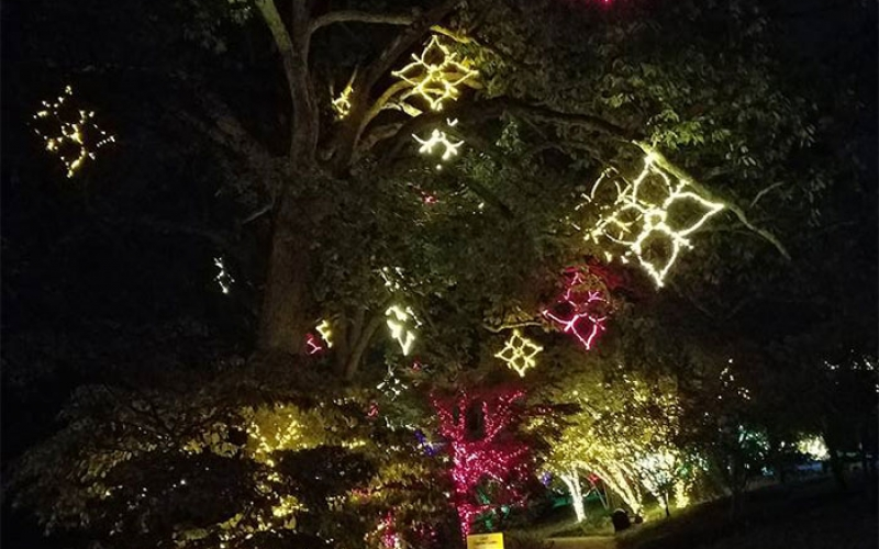 nashville commercial holiday outdoor lighitng at cheekwood gardens