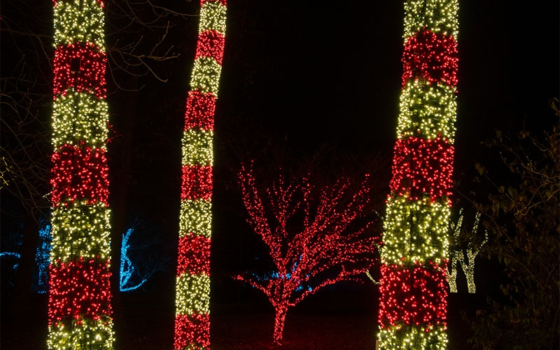 Christmas Lawn Lights